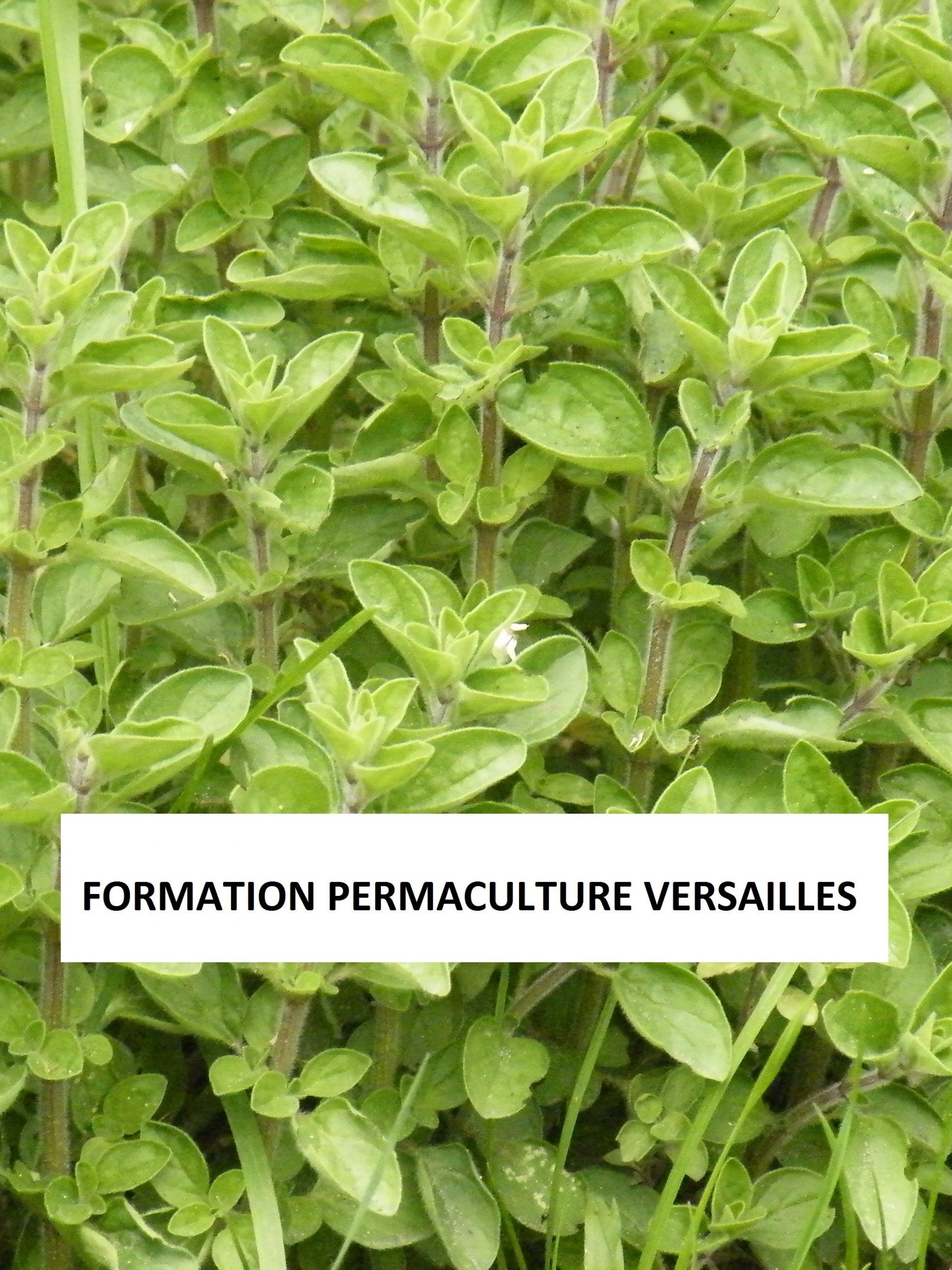 FORMATION PERMACULTURE VERSAILLES