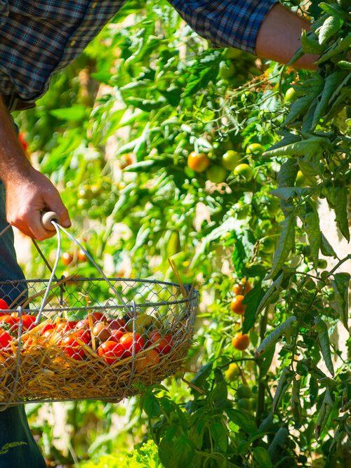 Introduction à la permaculture, à l'éco-culture et à l'agriculture urbaine